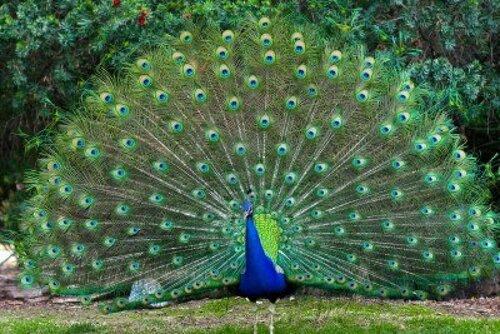IRIDESCENCE les miroirs de la nature