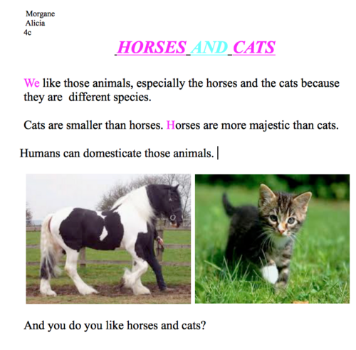 HORSES AND CATS