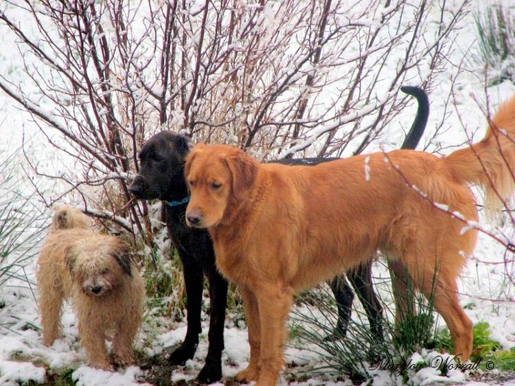 Nouvelles du Canada 132 : Première neige