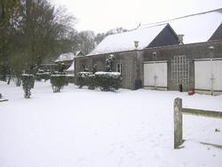 Le roseray sous la neige