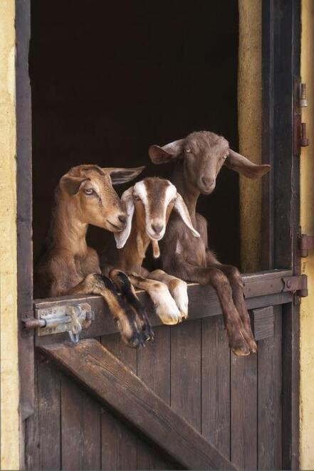 Un petit séjour à la ferme
