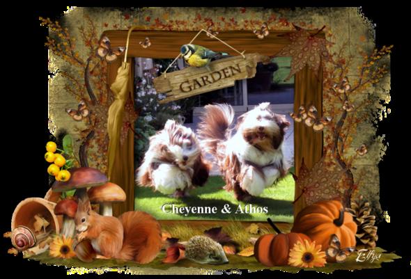 ♥ Belle journée d' Athos & Cheyenne ♥