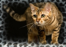 Dore Ô Thé8295753-bw-leopard-peau-arriere-plan-ou-la-texture-grande-resolution