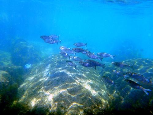 13 au 20 novembre: Ilha Bela (Belle île!!) ou l'ile des Borrachudos