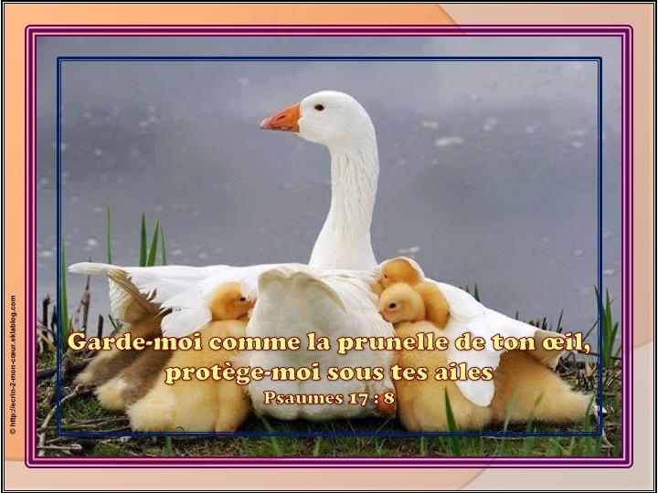 Protège-moi sous tes ailes - Psaumes 17 : 8