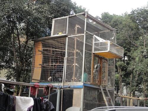 Visite des colombophiles de Shangai