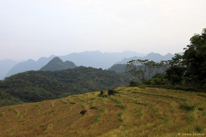 Rizières de la réserve naturelle Pu Luong, Viêt Nam