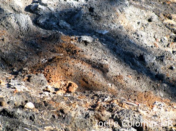 Terre brûlée