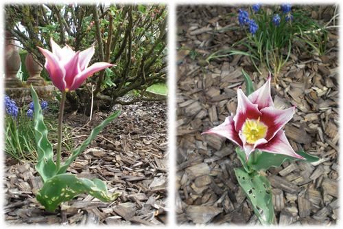 Quelques Découvertes au Jardin