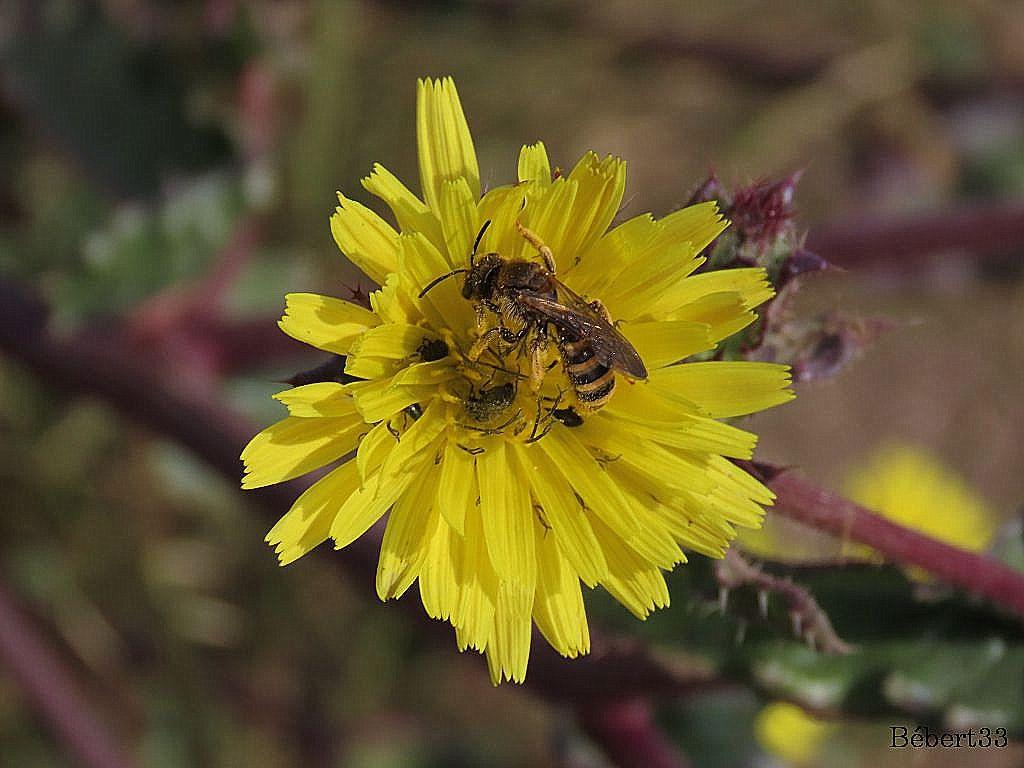 des fleurs en été