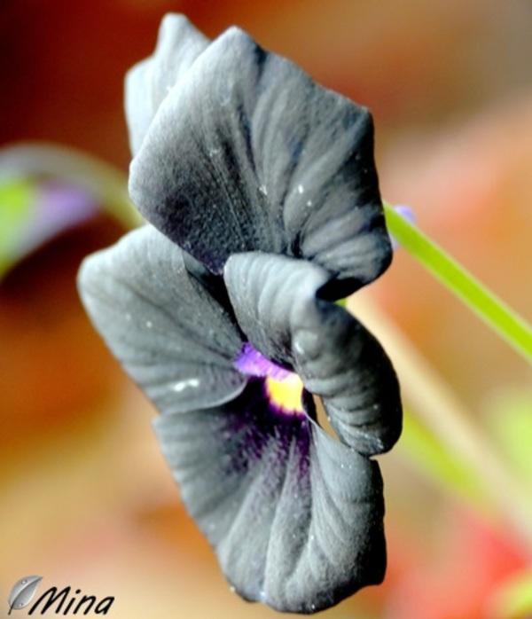 La beauté des fleurs - Curieuses...