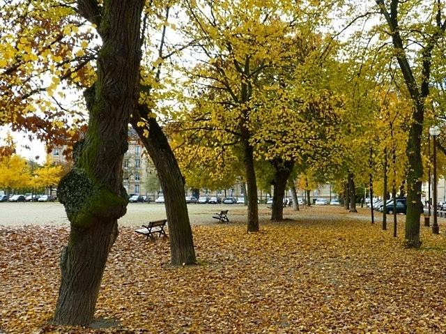 Metz en automne 3 Marc de Metz 2011