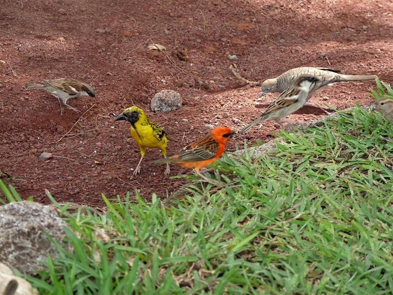 Quelques oiseaux affamés