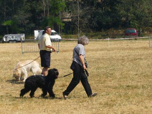 Meilleur Puppy a Ventabren le 29 Juin 2008
