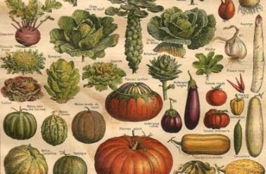 Le BA ba des plantes potagères