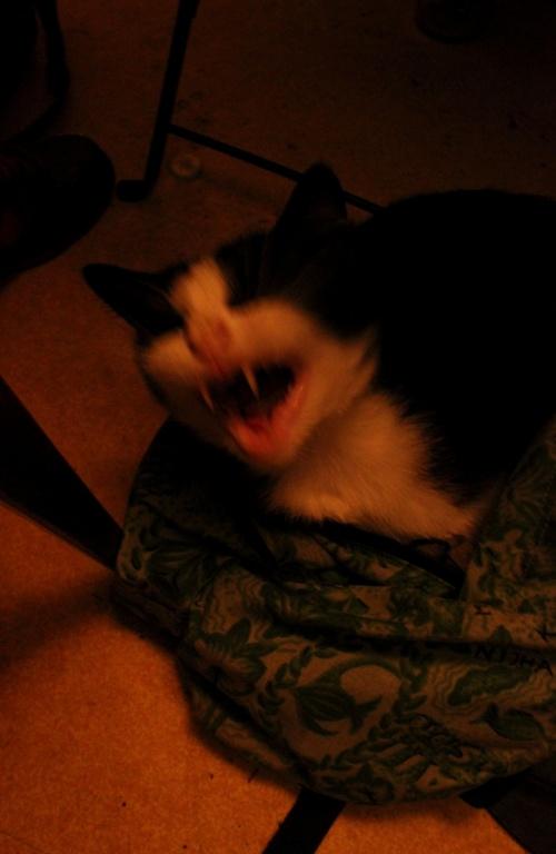 VAMPIRE CAT'S EYE