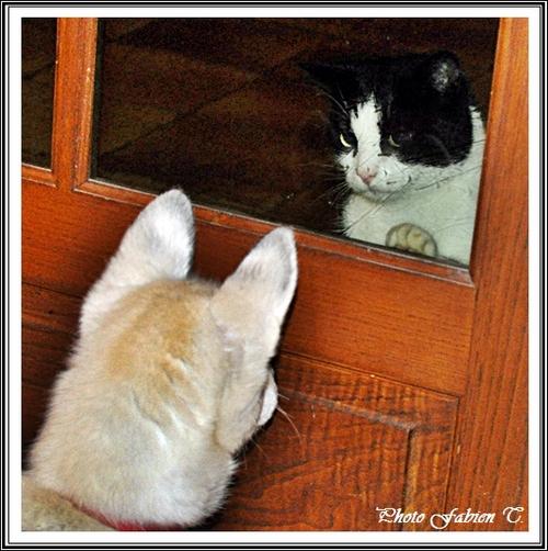 Comme chien et chat (23 mars 2013)