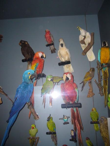 Toulouse museum d'histoire naturelle
