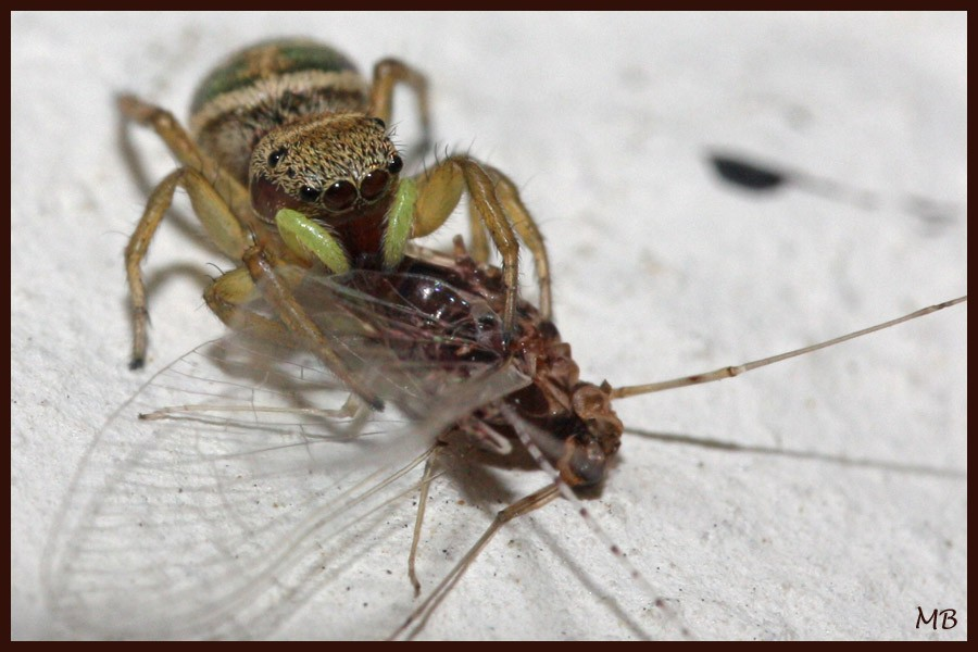 Arachnides-03-5381.jpg