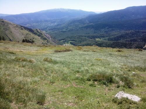 Les brebis et le tour de France à Pailhères