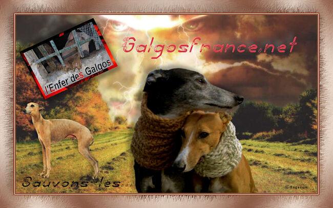 Cadeau de mon forum pour l'association Galgosfrance