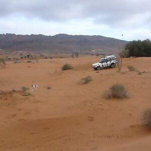 Balade en Dromadaire - Un 4x4 dans le desert
