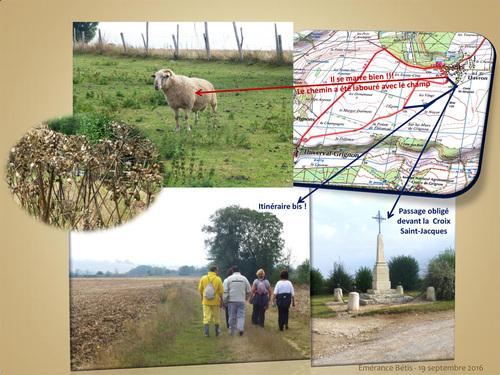 Boucle de 6 km Davron - Thiverval Grignon