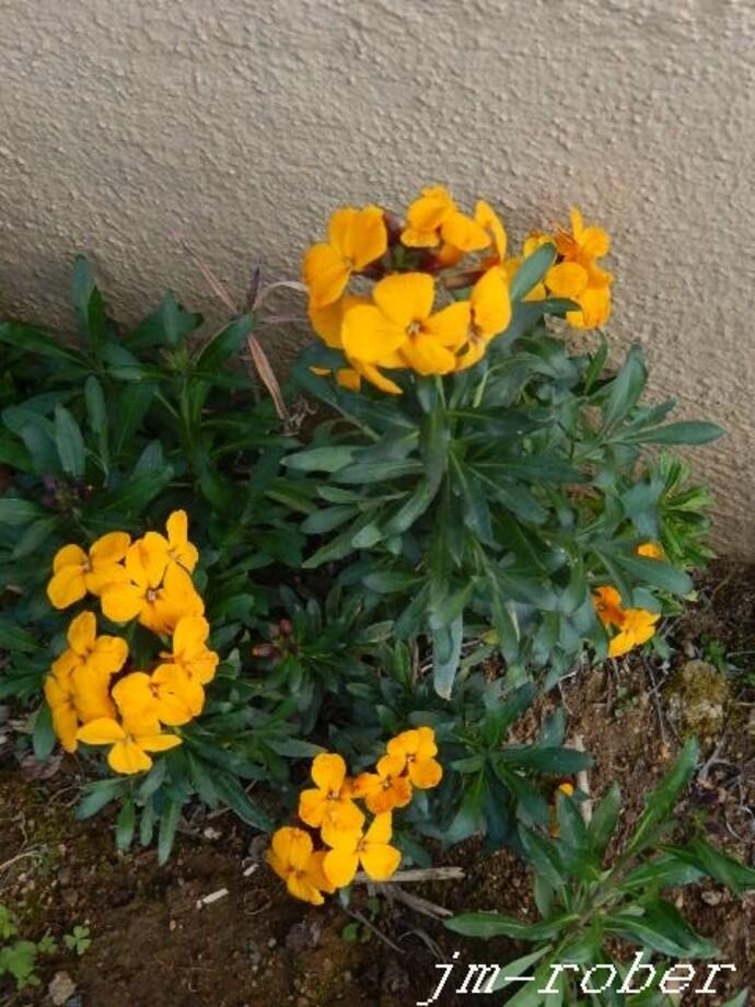 Côté Jardin: le printemps et le plaisir des fleurs