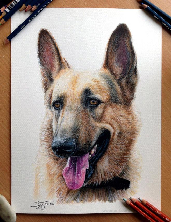 dog drawings animals