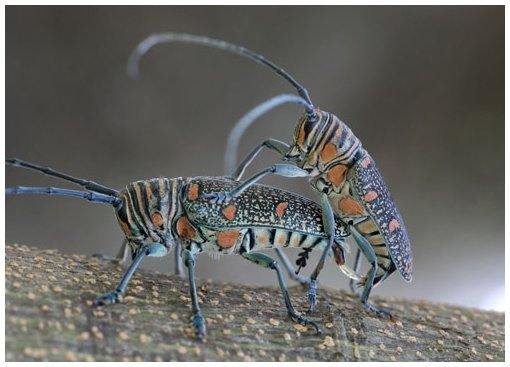 Blog de lesscorpionsdeouarzazate : Les Scorpions de Ouarzazate, LE COLEOPTERE