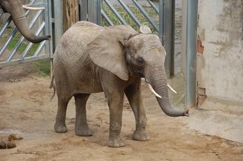 Zoo Osnabruck d50 2012 134