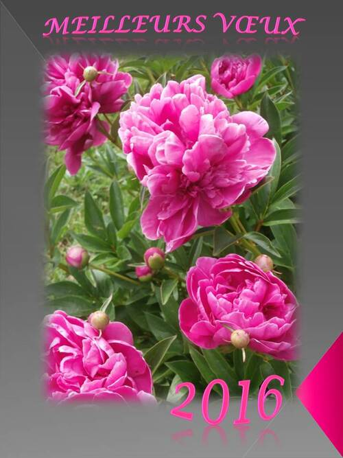 une carte de voeux ultra simple sur un fond gris, texte rose et une image de pivoines roses