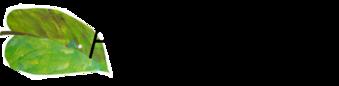 La chenille qui fait des trous