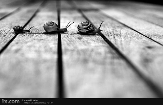 Photographie noir et blanc inspiration:
