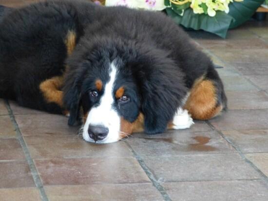 Jasper au quotidien