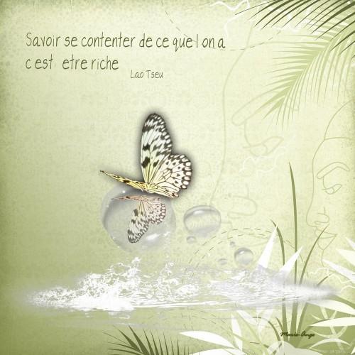 papillon zen