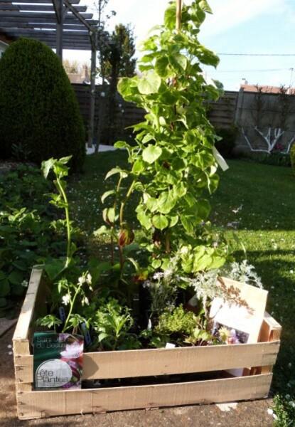 st-jean-de-beauregard---cagette-de-plantes.jpg
