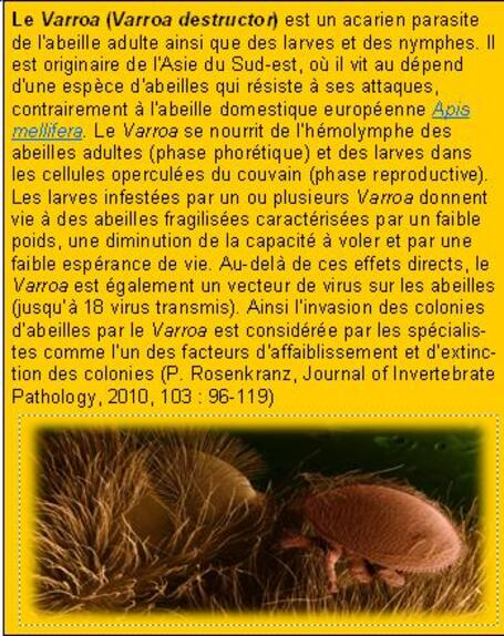 Lutte contre varroa destructor