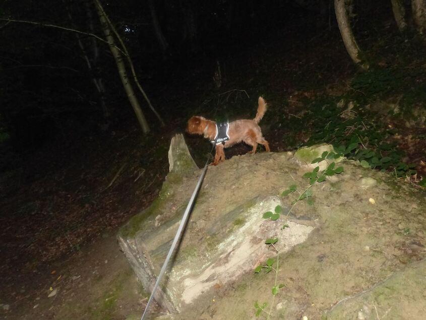 Woopy fait de l'escalade!