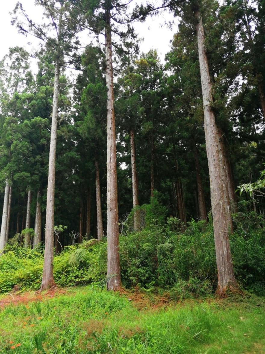 17/10/19 : Forêt de Bébour 4/5 (Réunion)  -