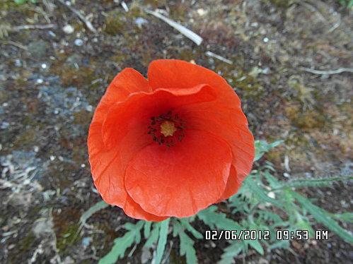 fleurs-et-champignon-003.JPG