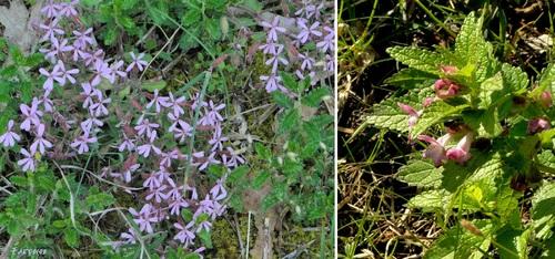 Un peu de biodiversité à Châteauneuf sur Isère... jusque dans les jardins