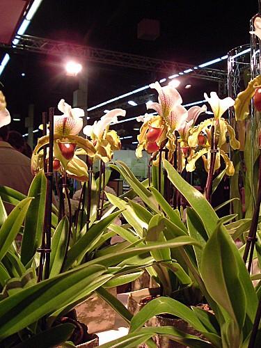 Orchidées 005