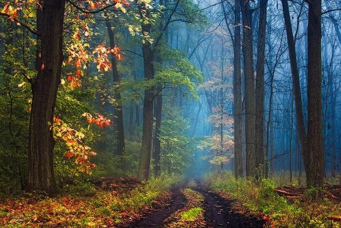 Photos enchanteresses de forêts automnales par un photographe errant
