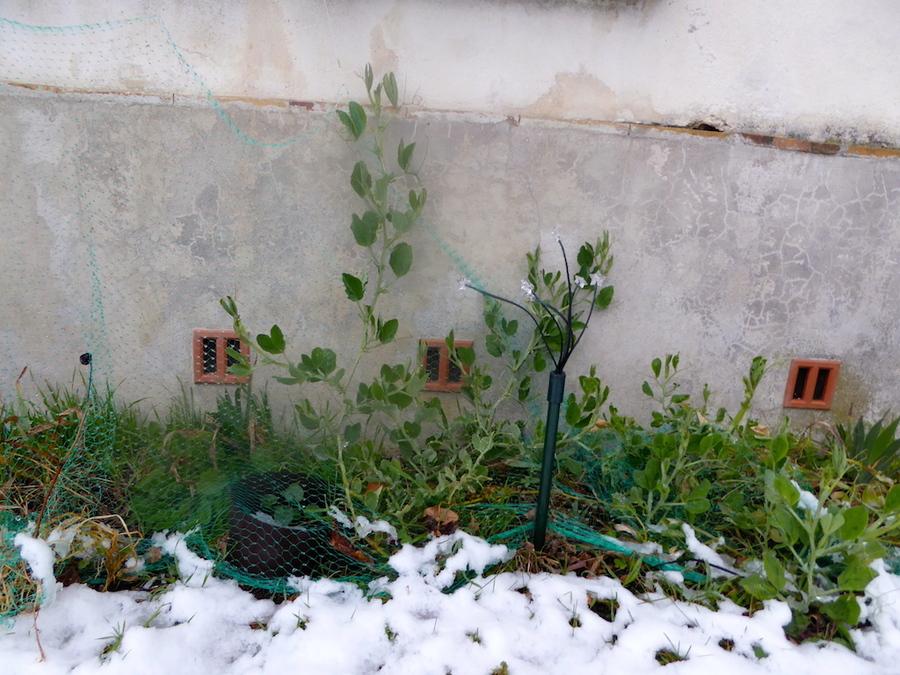 Après la neige que déviant le jardin?