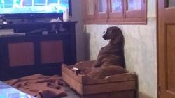 Qu'est qui y a à la télé !