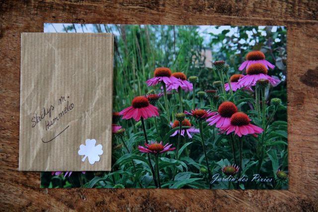 Seeds of Love 2018 : du bonheur dans la boîte aux lettres ! (1)