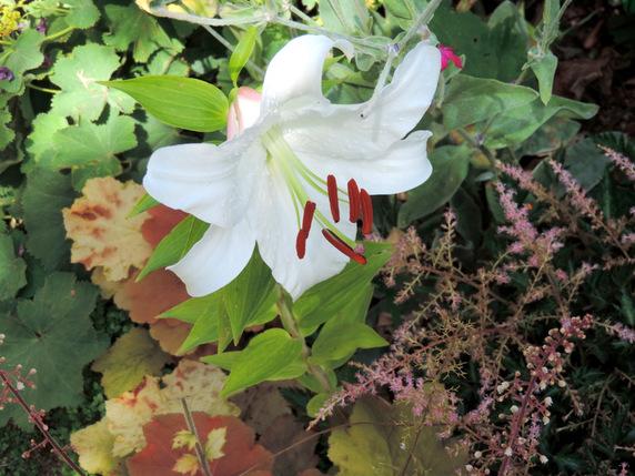Parfums d'été au jardin