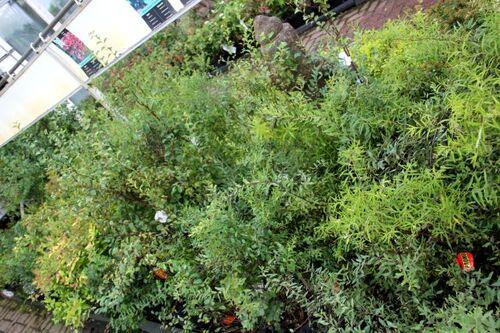 Les soldes du jardinier