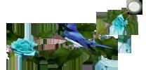 Design for eklablog